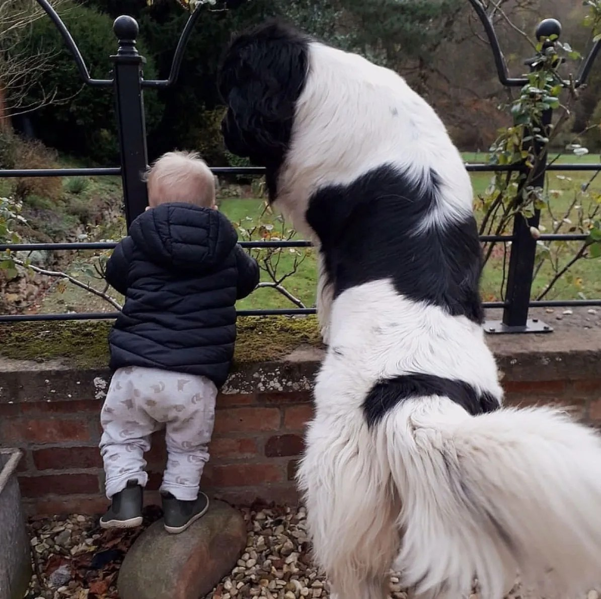 Ed Stafford and Laura Bingham's son Ranulph Stafford with one of their Newfoundland dogs in the garden of their Leicestershire home