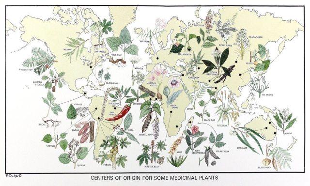 medicinal plants amazon