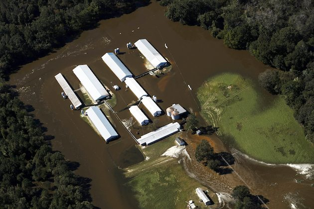 Seven Springs Hog Farm has 3 waste water lagoons underwater from Hurricane Matthew Flooding. Photo by Rick Dove/Waterkeepers Alliance