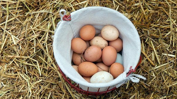 eggs-1595607__340