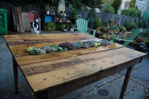 300x199 Build A Living Garden Table From Wood Pallets Project