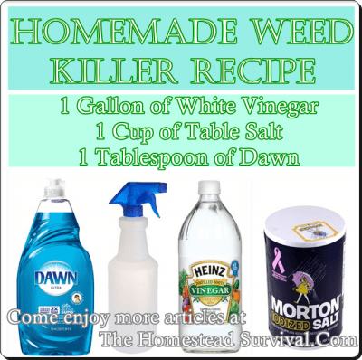 Amazing Weed Killer Spray Recipe And Tips The Homestead Survival