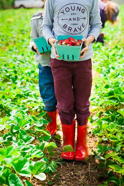 strawberries-9