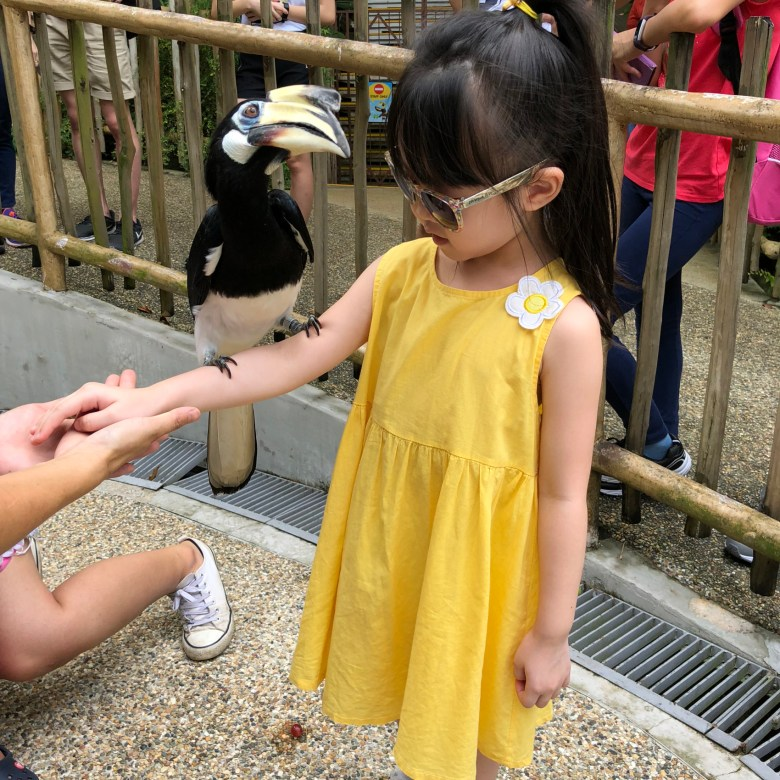 Review Bird's Eye Tour family experience Jurong Bird Park
