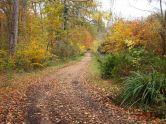 Forest track Culzean