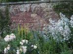 Old walls & roses