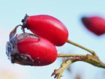 Berry nice!