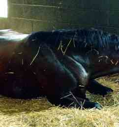 the equine digestive tract and how it relates to colic [ 1280 x 640 Pixel ]