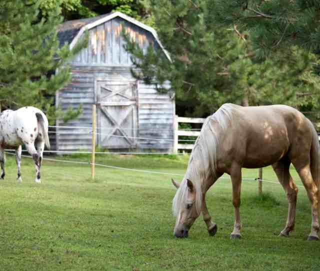 Innovations In Confinement Area Horse Keeping