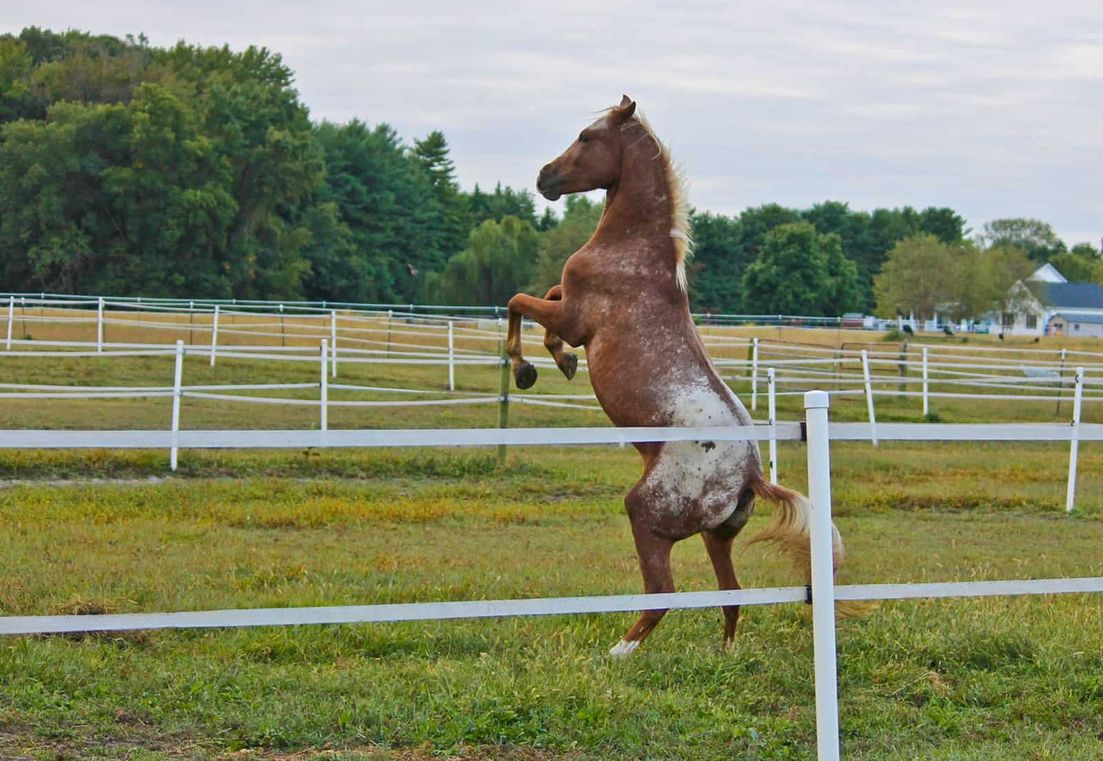 Spontaneous Rearing And Food Aggression In Horses The Horse
