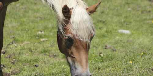 small resolution of digestion in the horse