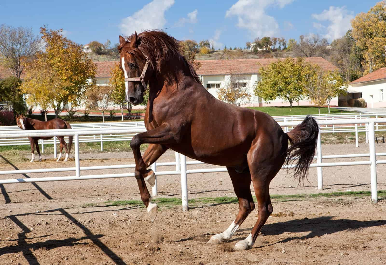 Why Is This Horse Rearing The Horse