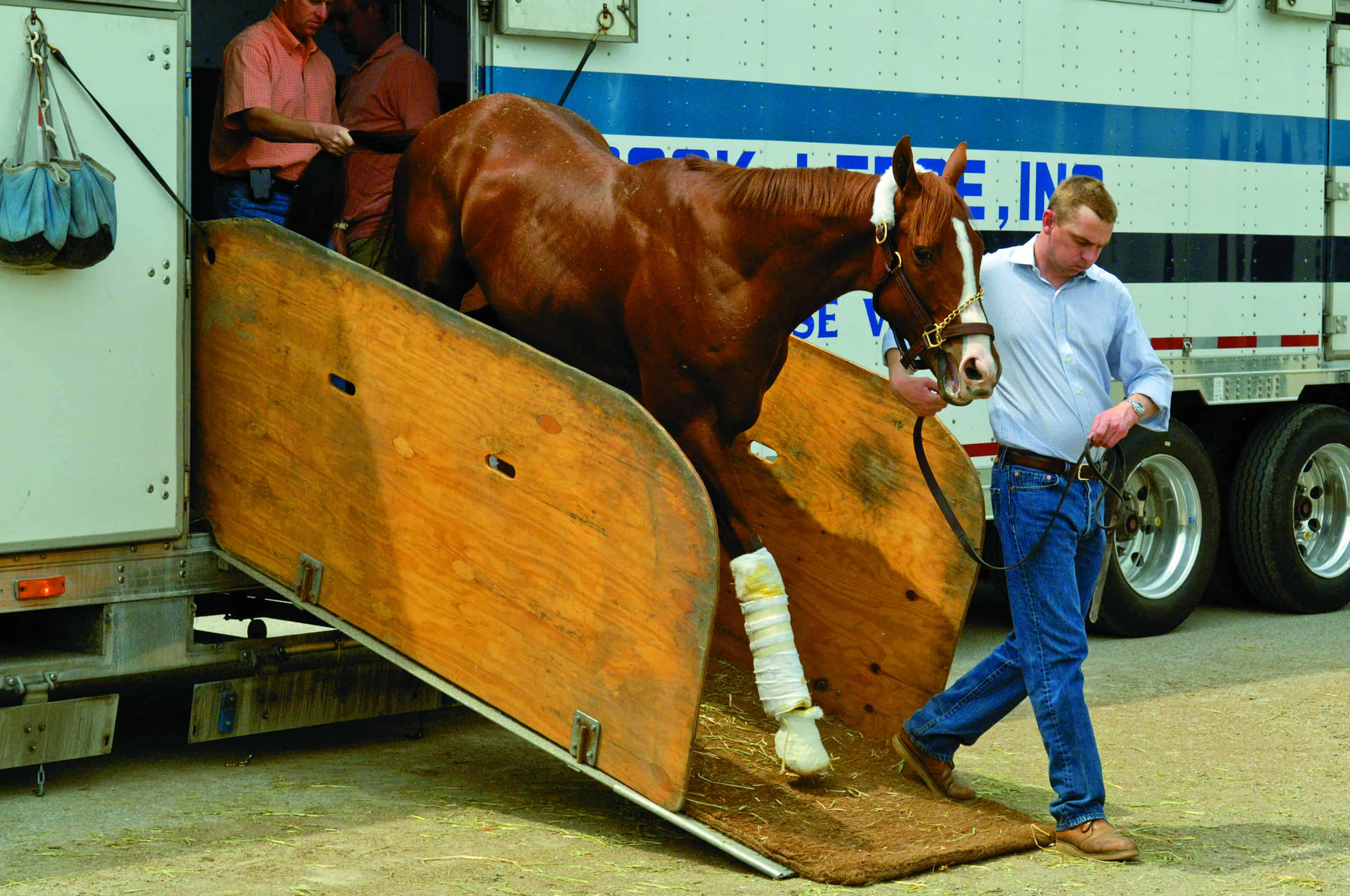 Horset Transportation And Exercise Performance The Horse