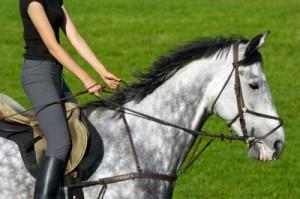 beginner horse riding lessons