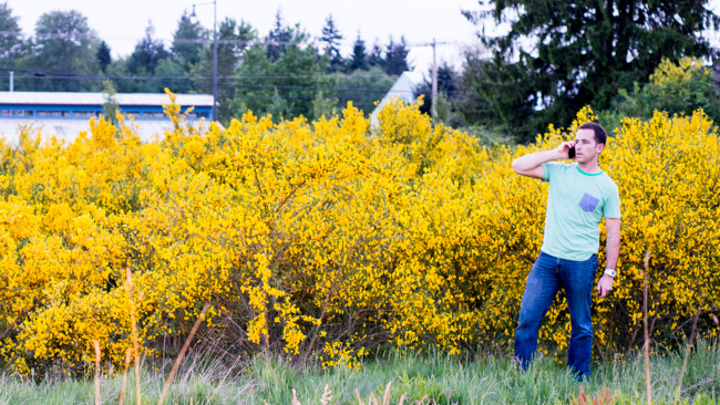 cytisus-scoparius-scotch-broom-scots-english-common-RMB_2513-ryanbenoitphoto-thehorticult1.jpg (650×366)