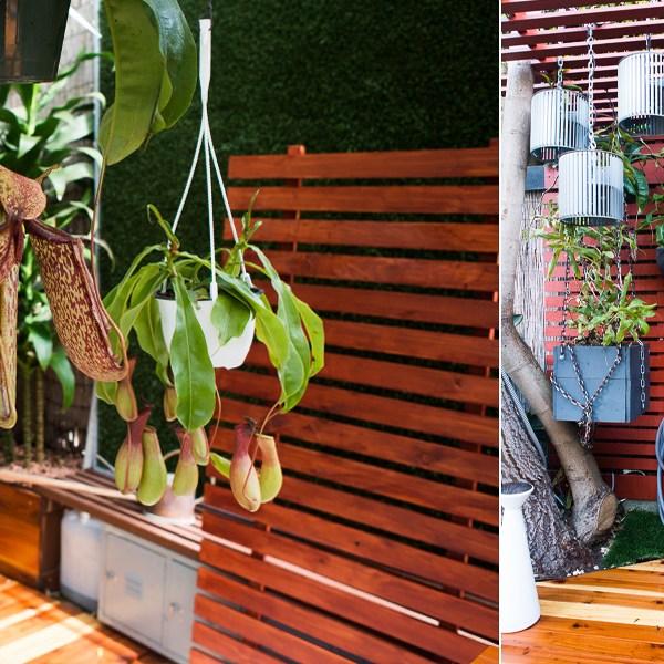 Slat Trick: How We Built a Healthier Habitat for Our Nepenthes Pitcher Plants