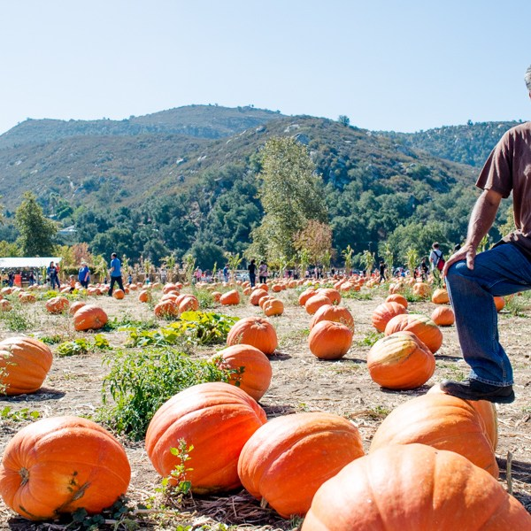 Patch Work: At Bates Nut Farm, the Planting Team Gives Us the Skinny on Growing Plus-Sized Pumpkins