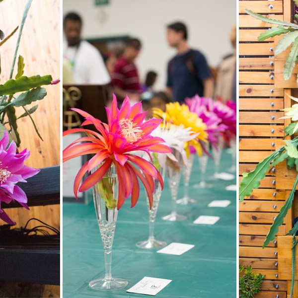Opening Night: Epiphyllum Cacti, Their Flowers, and the People Who Love Them
