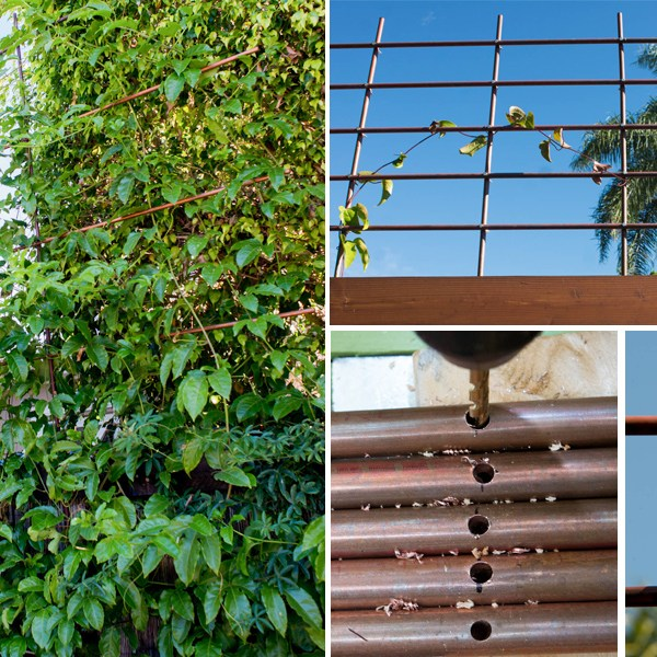 Going Super Vertical: How to Build a Copper Pipe Trellis (Without Soldering)