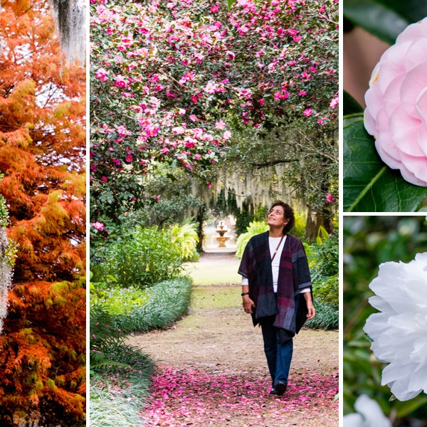 Inside the Camellia Belt: A Visit to Airlie Gardens in Wilmington, North Carolina