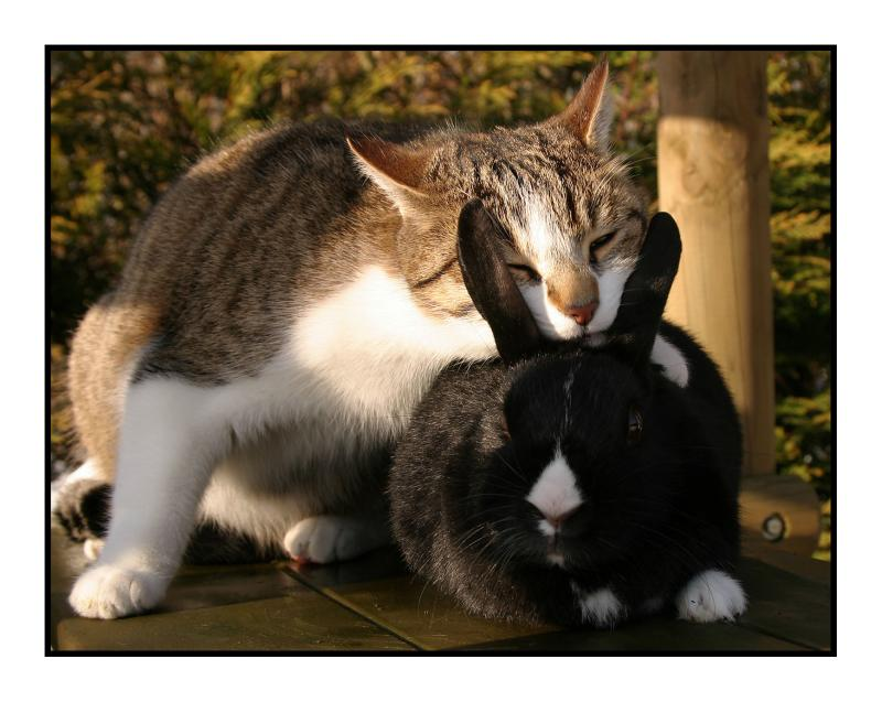 sox and bunny