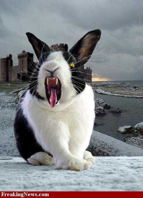 The-Killer-Rabbit