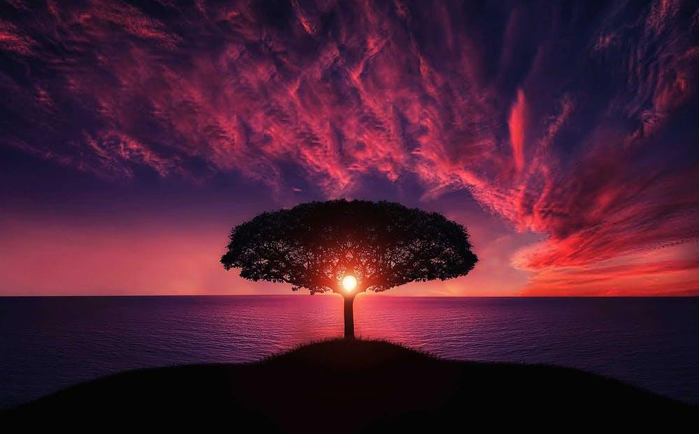 words of wisdom, tree and light
