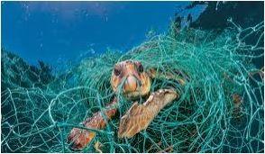 Plastic pollution, sea turtle