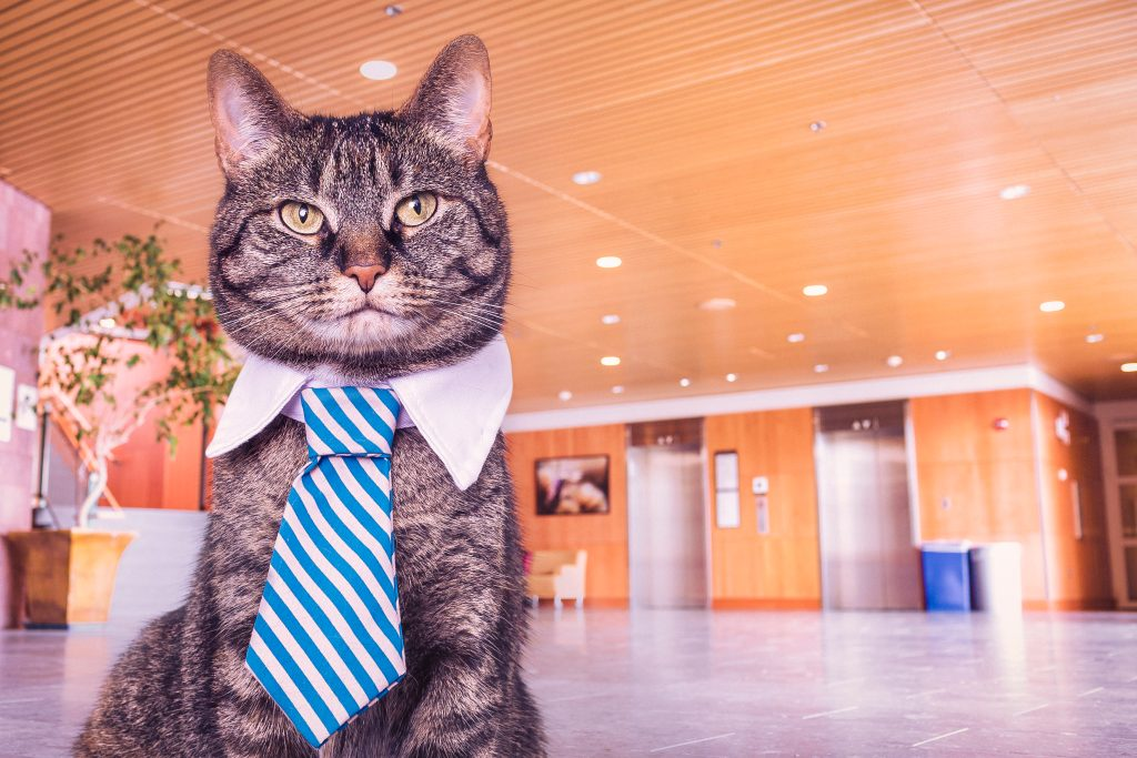 working from home, cat with tie
