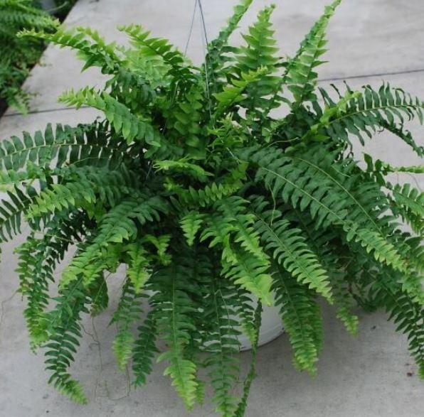 Green living, plant
