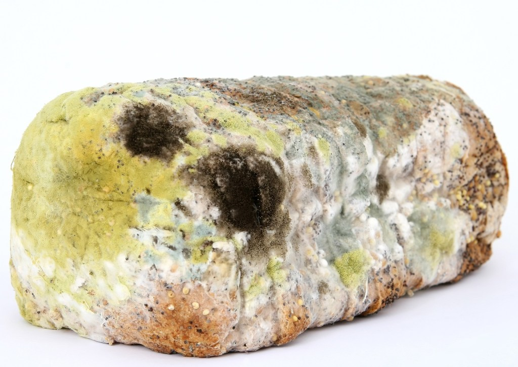 Mold, bread