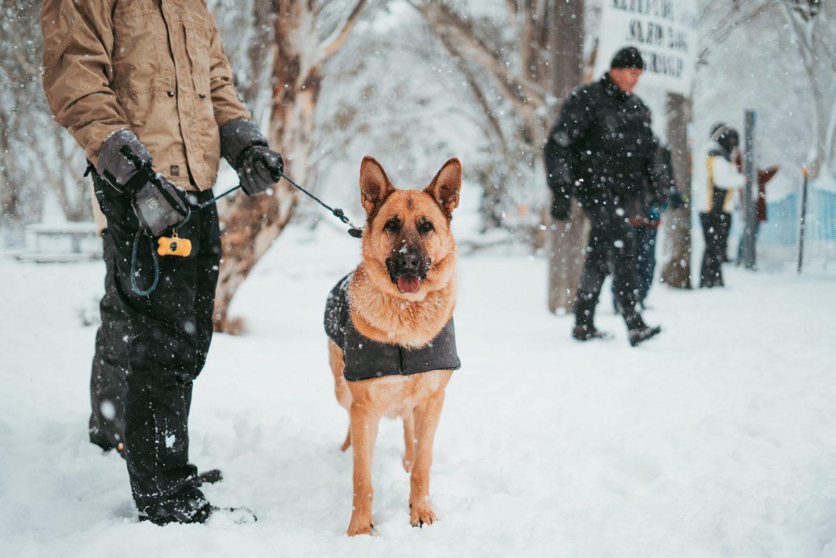 SAR dog, man in snow