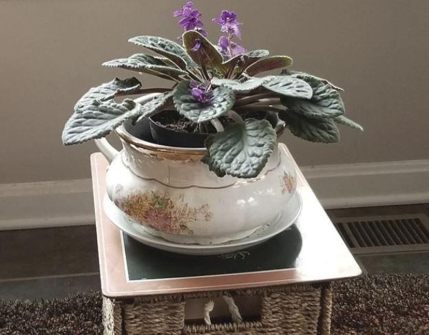 Vintage chamber pot planters