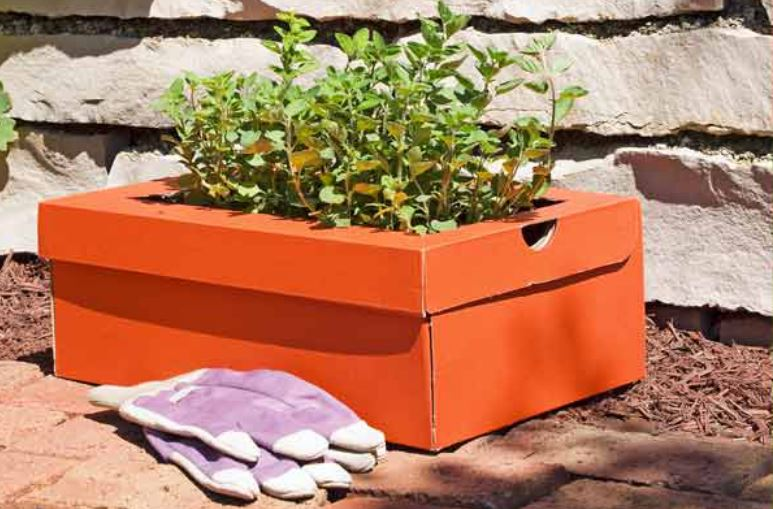 Shoe box planter