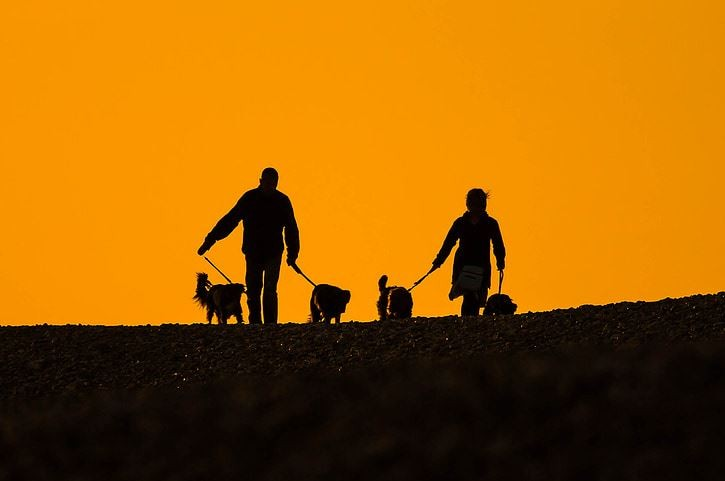 Health benefits, dog walking
