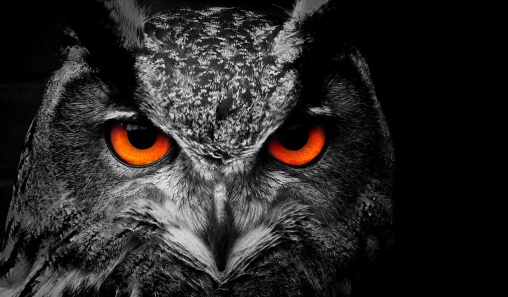 Owls nocturnal birds