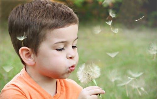 unschooling, boy in orange shirt blowing tufts on dandelion