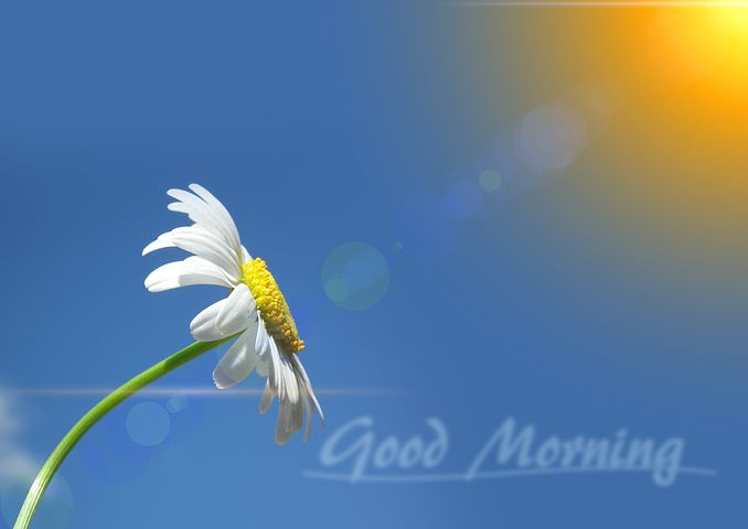 daisy, words good morning on blue background