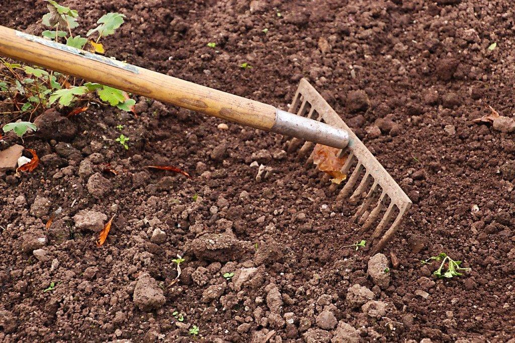 amending soil, rake in dirt
