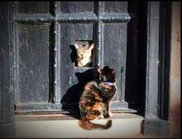 Isaac Newtons Cat flap