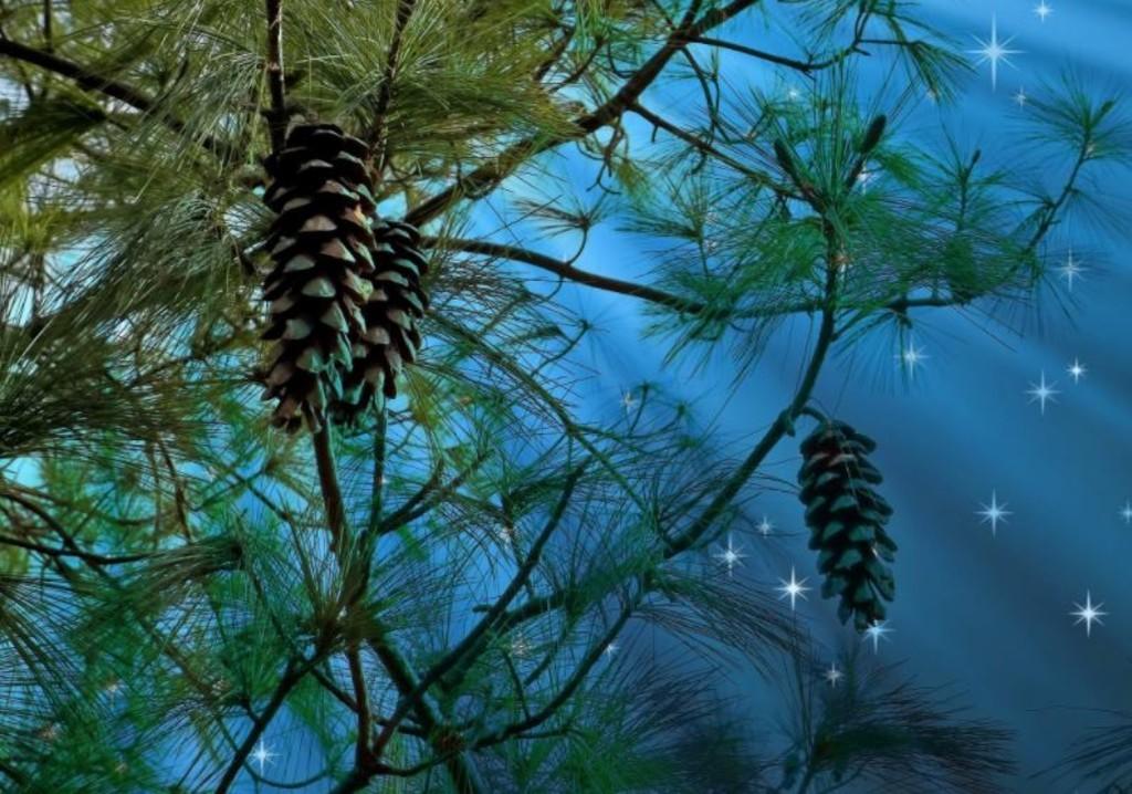 Nature Pine needles