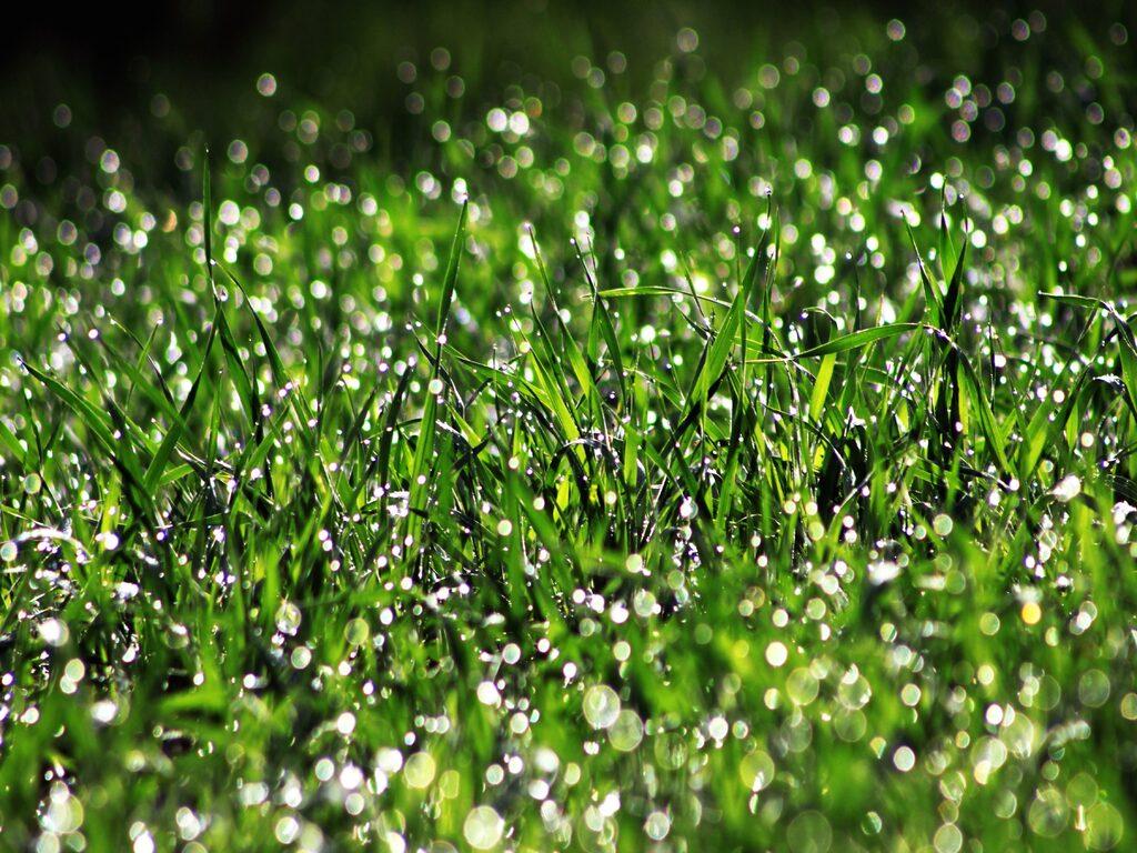 Dangers wet grass