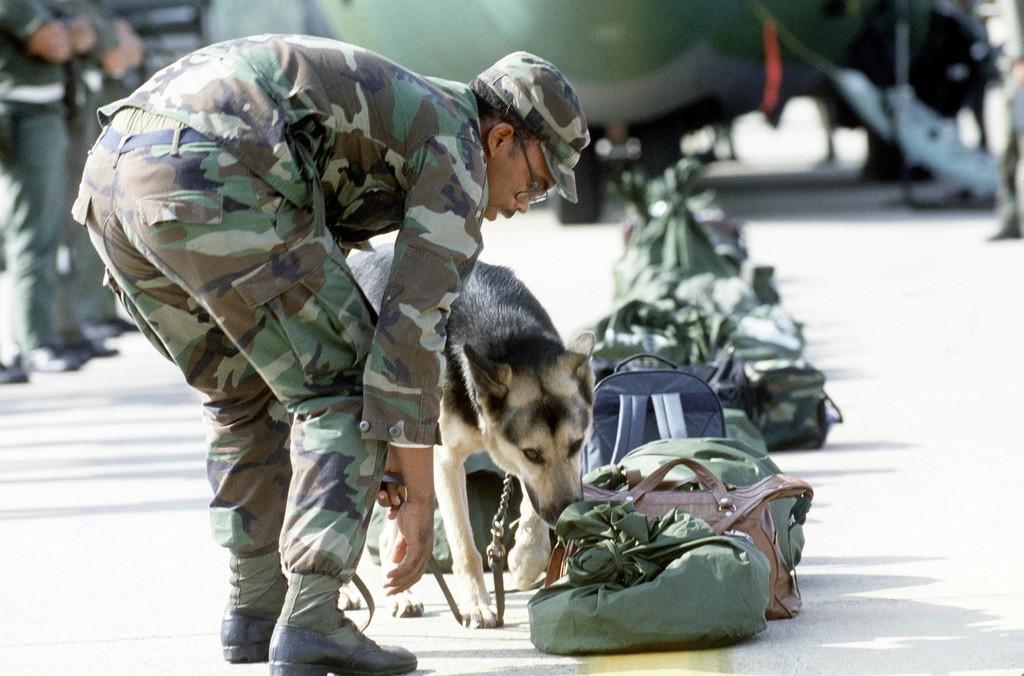 Working dog sniffing luggage