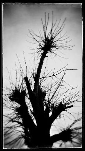 """""""Winter Tree"""" photography by Mia Makila, 2014"""