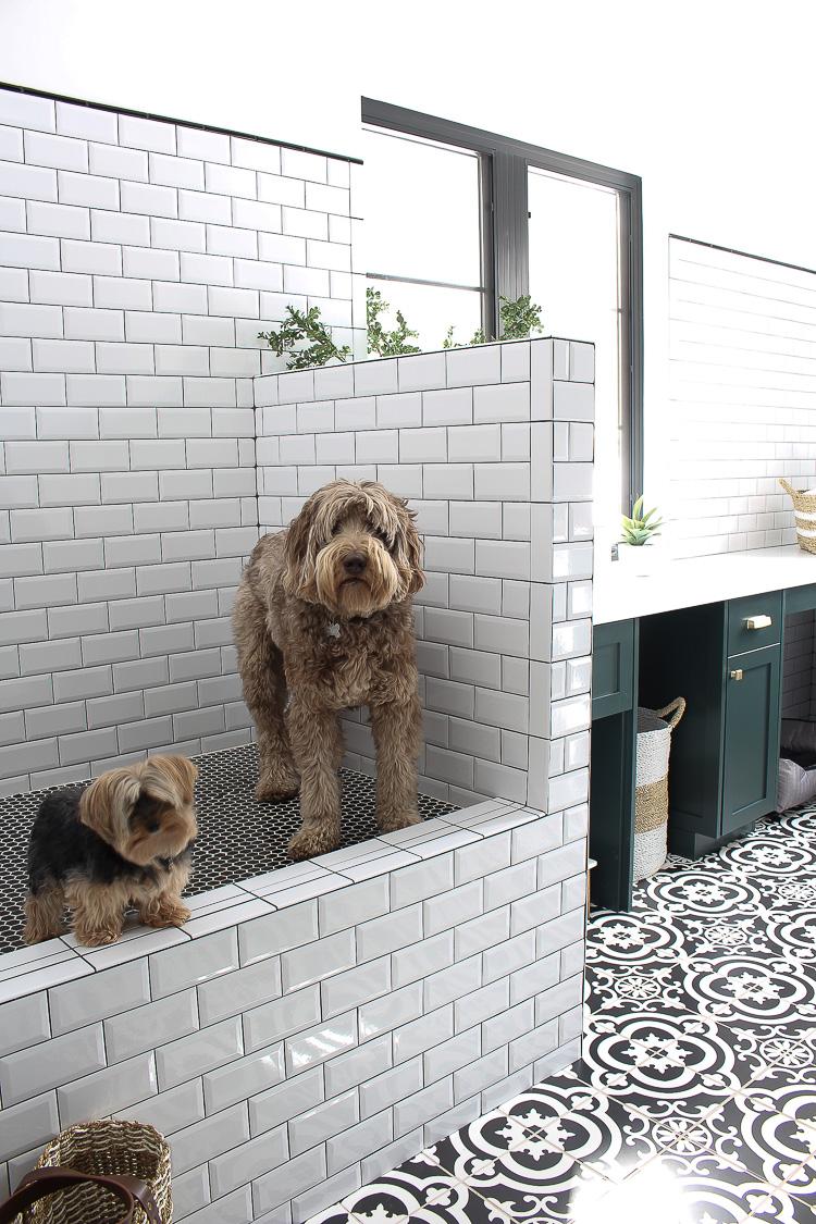 the laundry dog room dark green