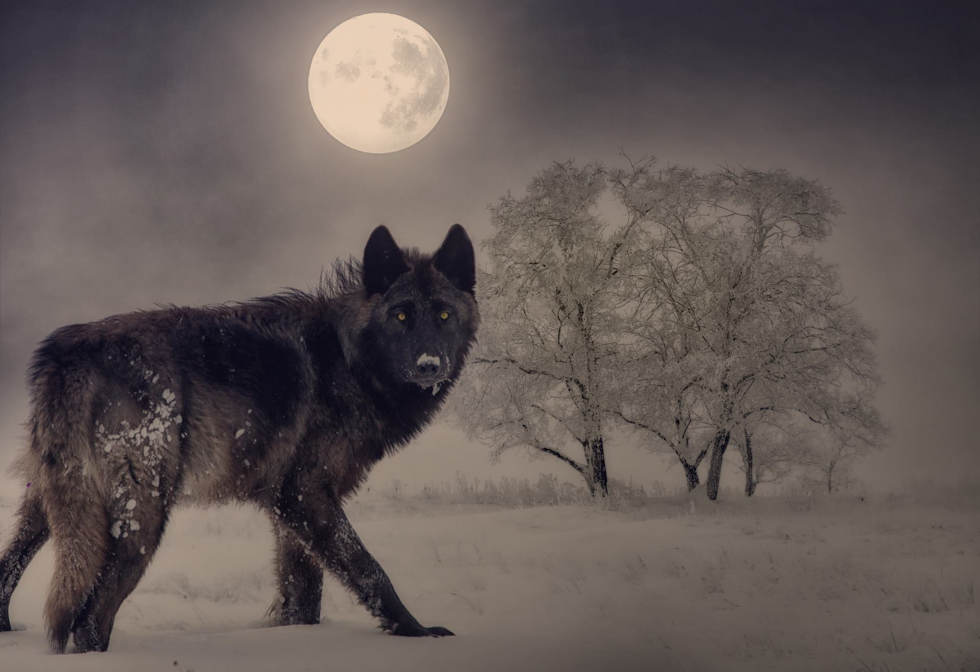 Our Year of the Hag: Imbolc Prophecies Beneath the Wolf Moon