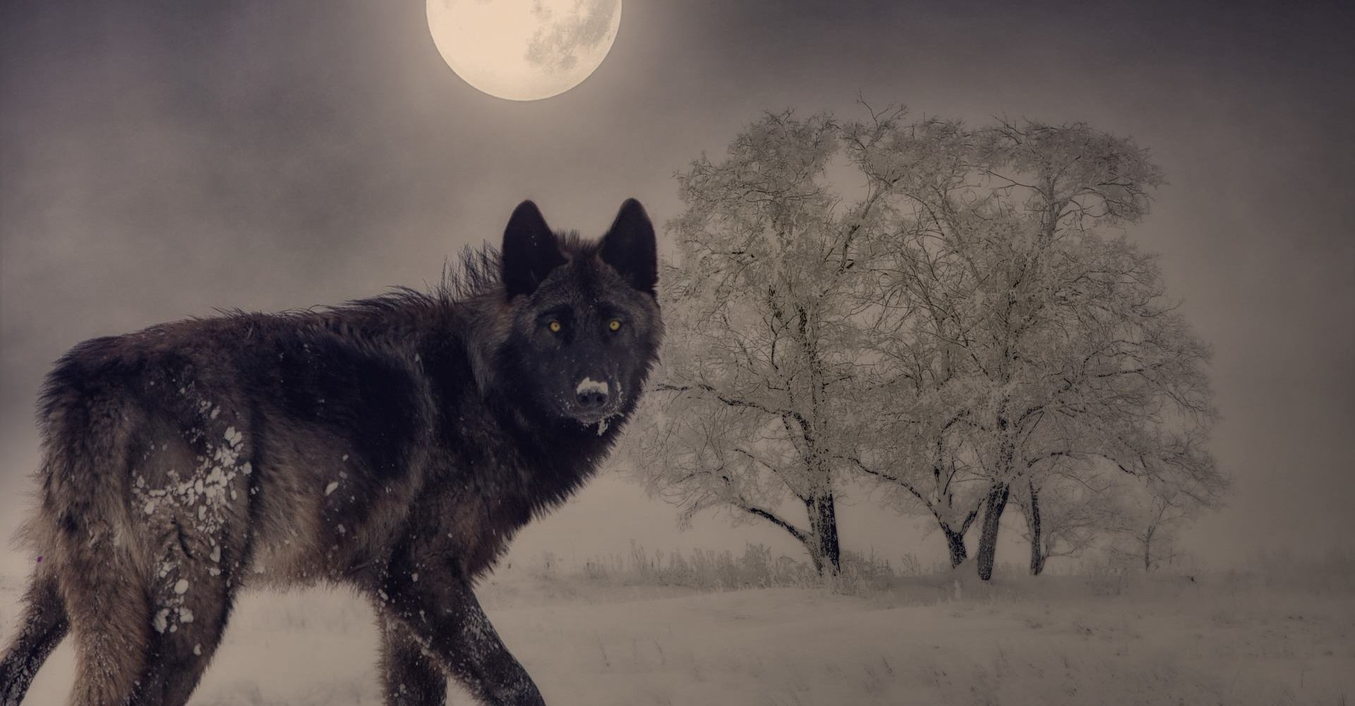 wolf woman witch danielle dulksy the house of twigs thot witchcraft full moon imbolc