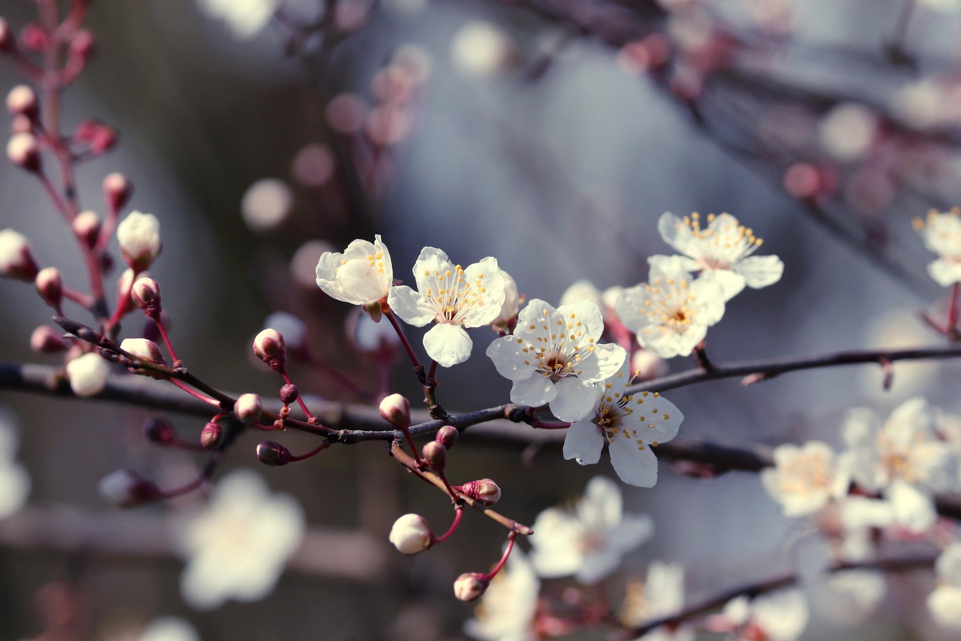 Spring Awakening – A Meditation.