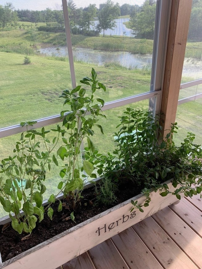 Herb garden with basil for my cocktails.