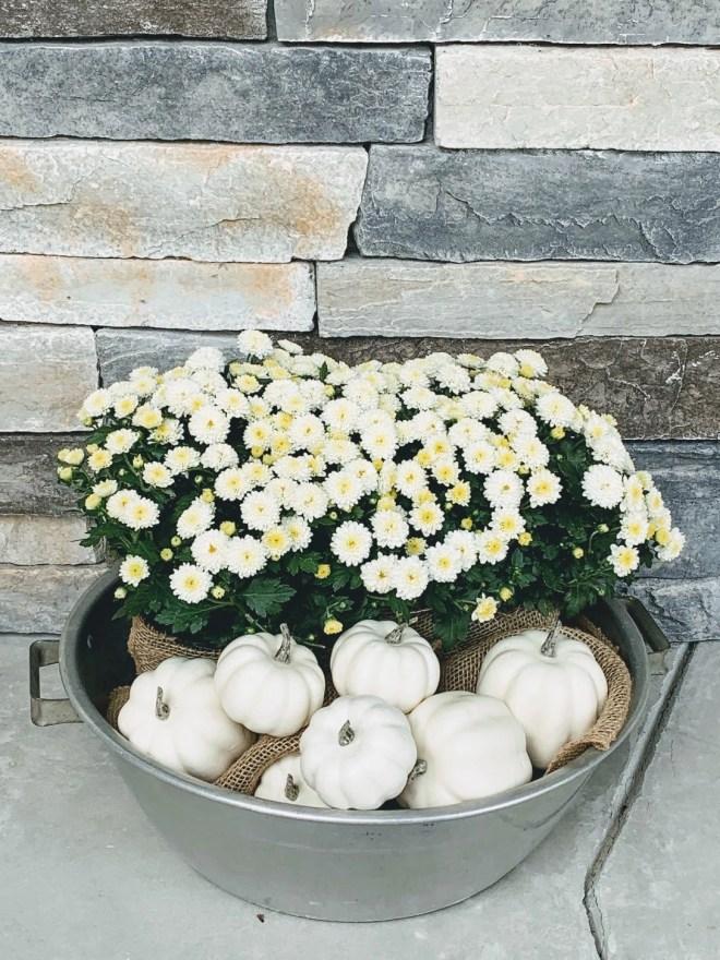 White mums and pumpkin decor for my Cozy Fall Front Porch